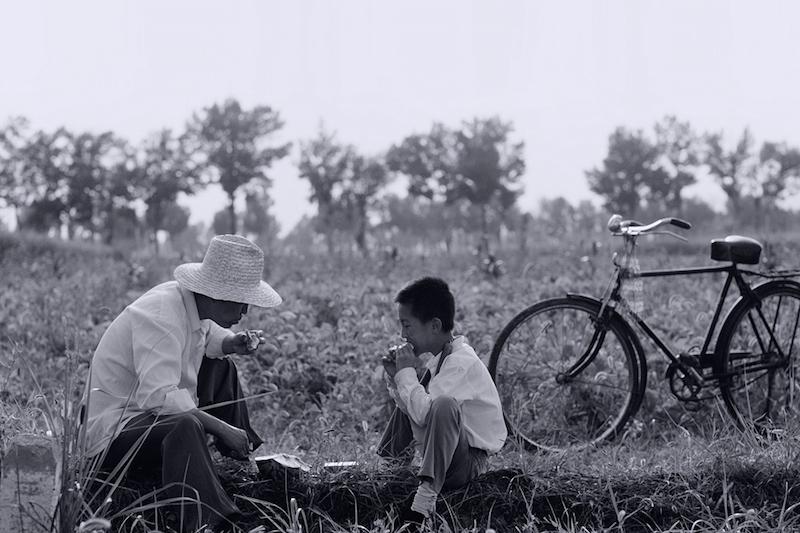 电影《八月》茂密的田野|金马影展